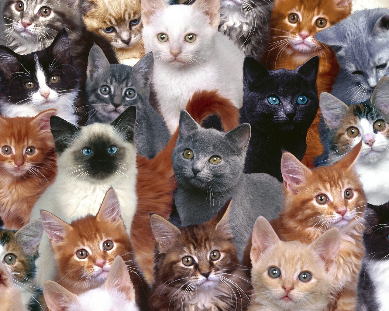Cats cats wallpaper