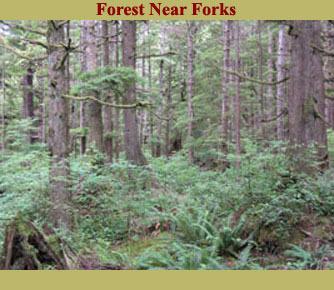 Forks Forest