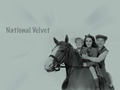 National Velvet - elizabeth-taylor wallpaper
