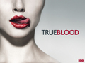 True Blood - sookie-stackhouse-series wallpaper