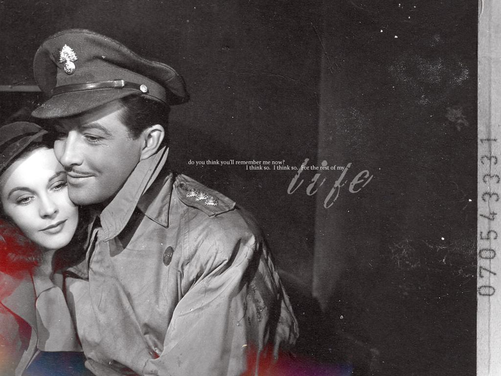 vivien leigh and robert taylor classic movies wallpaper