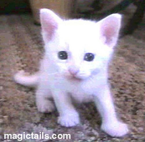 cute.kitten
