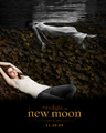 new moon- Bella Swan - twilight-series photo
