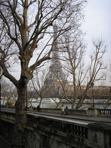 Paris wallpaper with a street, a live oak, and a brownstone entitled tour Eiffel
