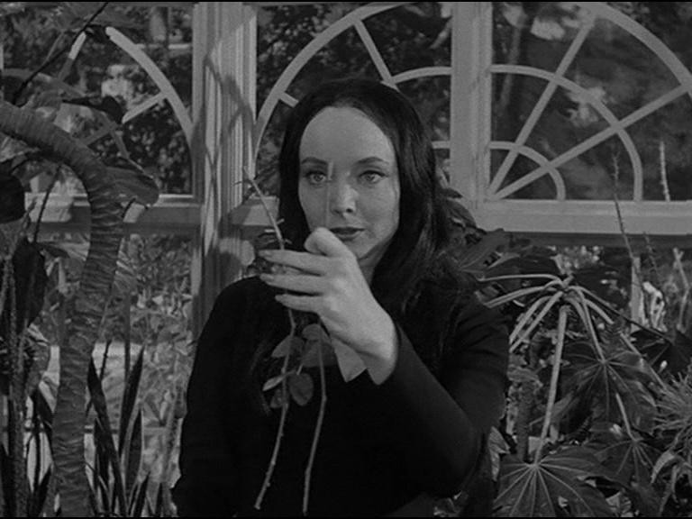 Cutting roses addams family morticia Morticia Addams,