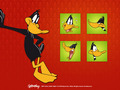Daffy bebek wallpaper