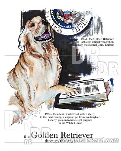 golden retriever, documentalista dorato