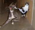 картинки прикольные с котами с надписями