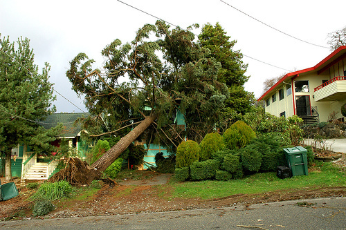 Windstorm accidents(1)