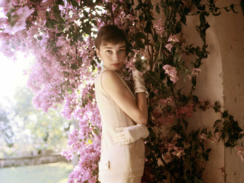 Audrey Hepburn wallpaper called Audrey Portrait