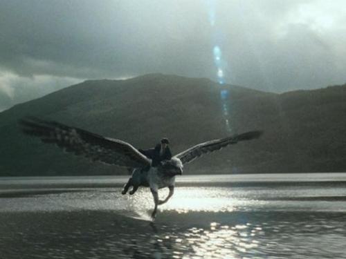 Buckbeak flying