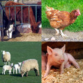 Farm animales Collection
