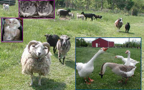 Farm animais Collection