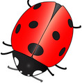 Ladybug - animals photo