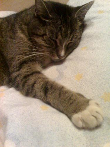 "My former cat ""Sternchen"""