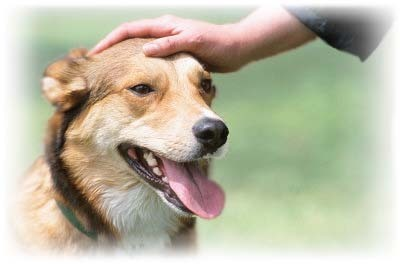 Person patting dog