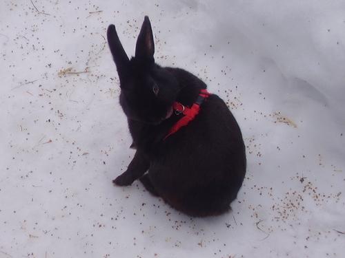 my bunny LIO