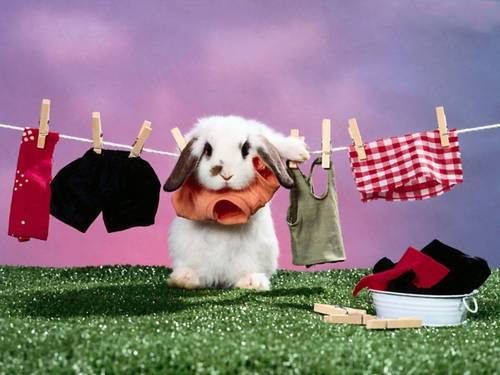 Bunny & Clothesline - bunny-rabbits Wallpaper