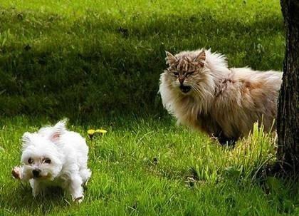 ネコ n イヌ