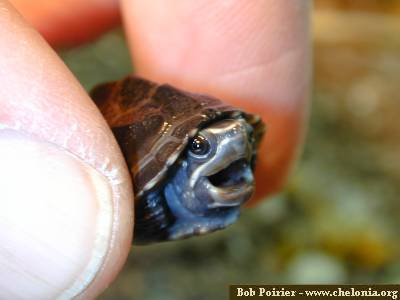 Cute - turtles Photo