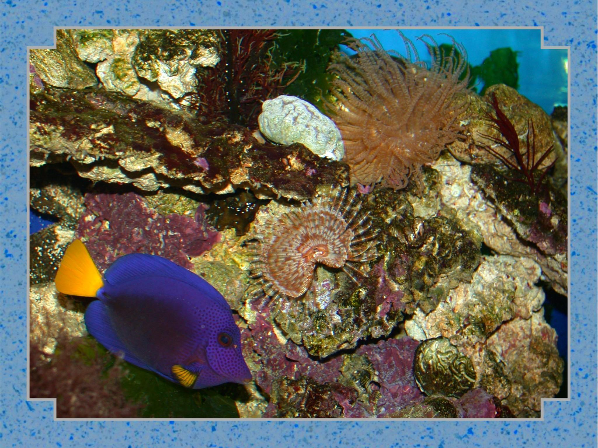 tropic fish - photo #42