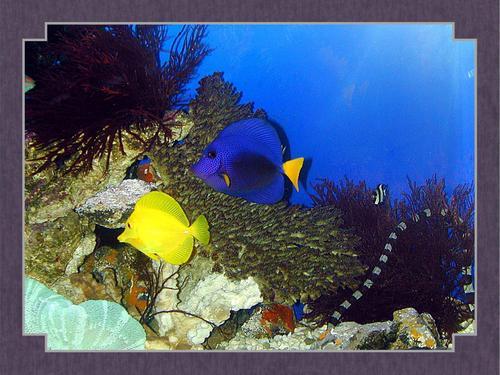 Tropical মাছ দেওয়ালপত্র