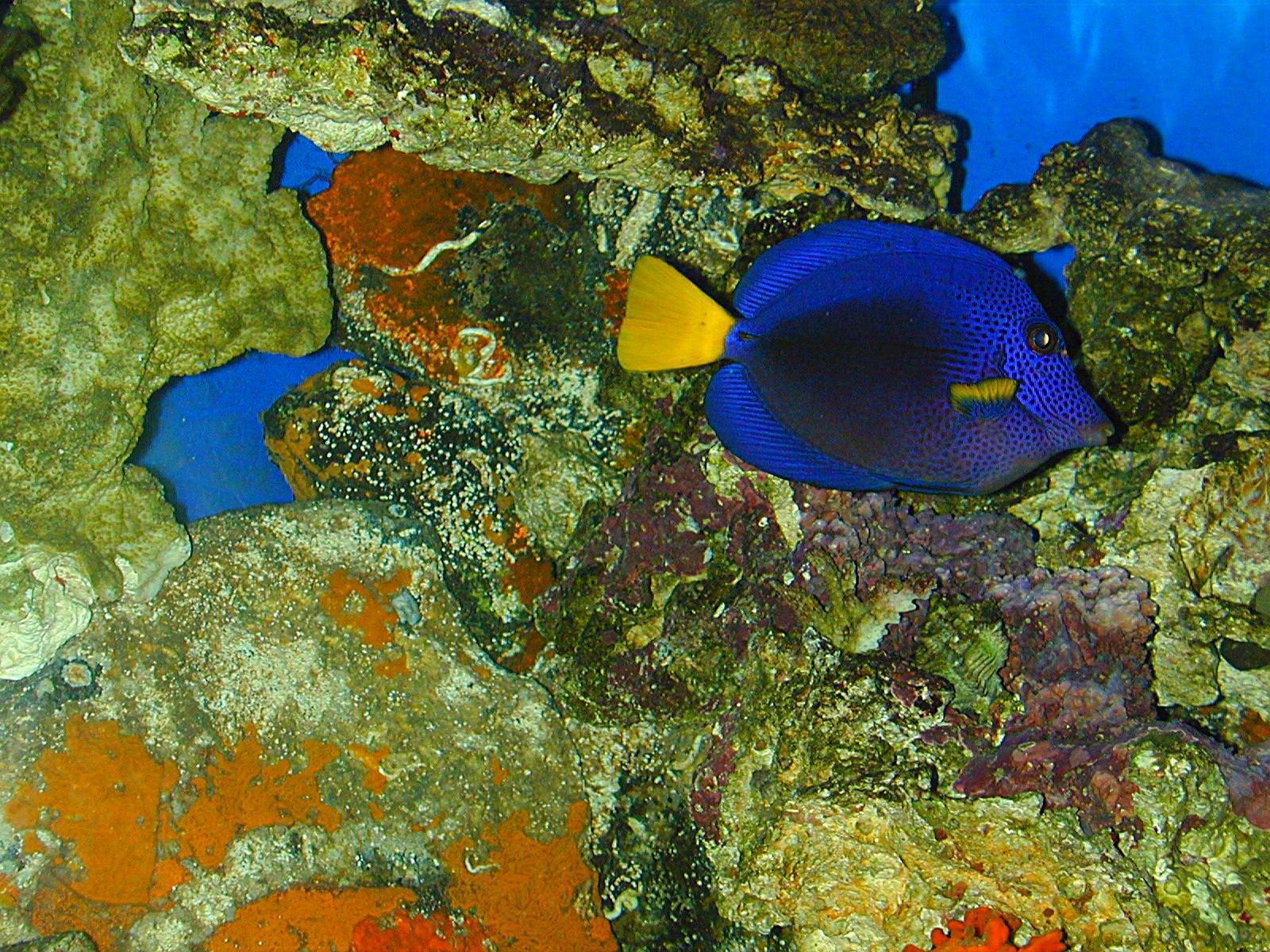 tropic fish - photo #19