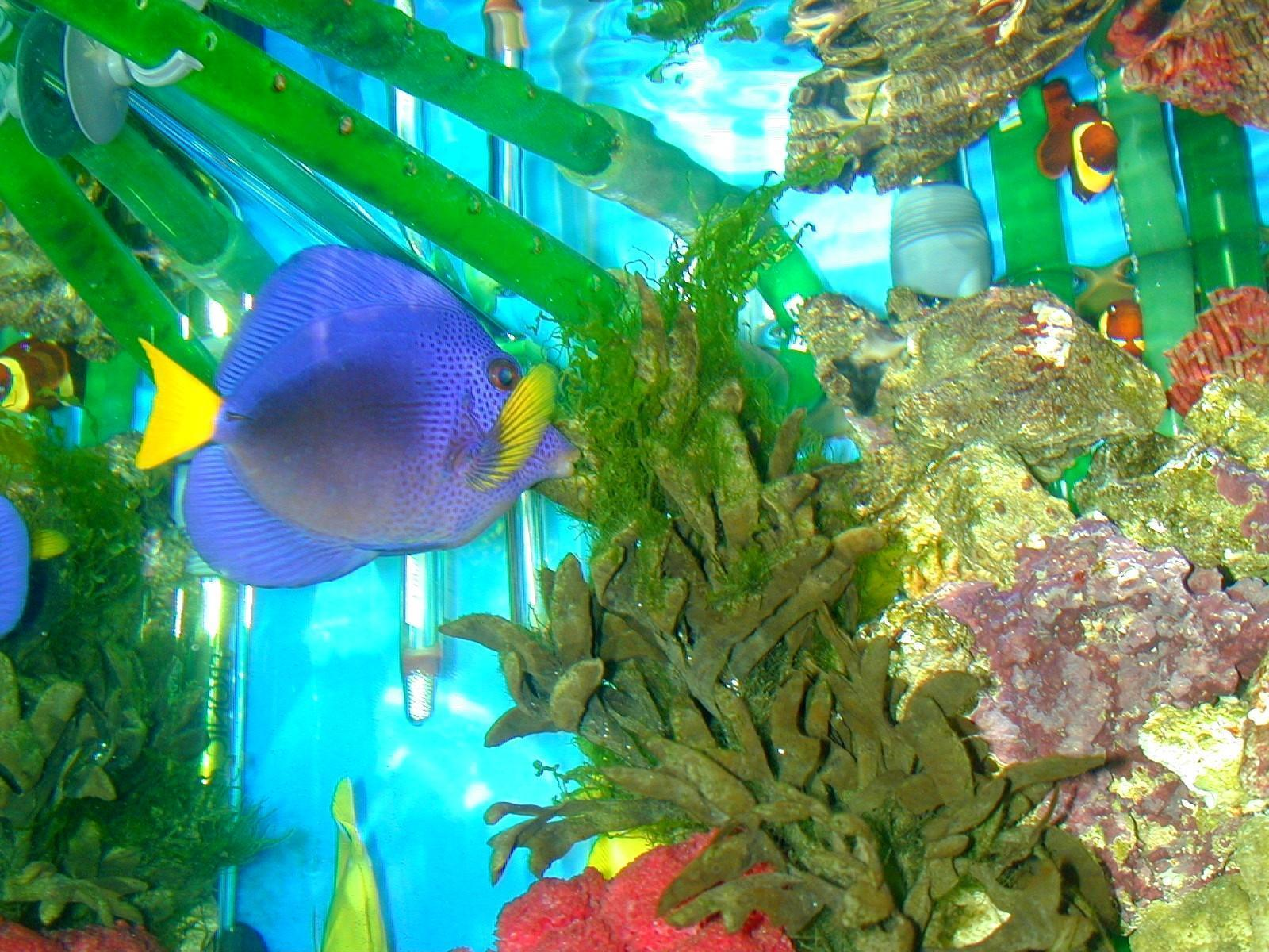 tropic fish - photo #33