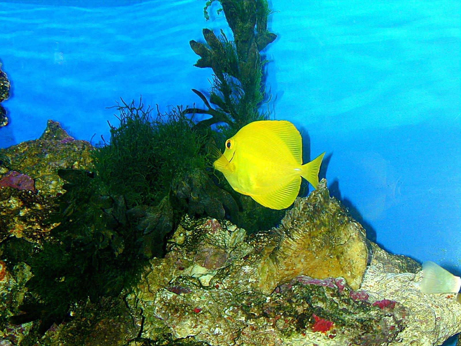 Tropical fish wallpaper fish wallpaper 5413001 fanpop for Tropical aquarium fish