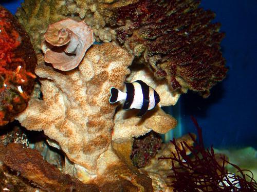 Tropical Fish Wallpaper