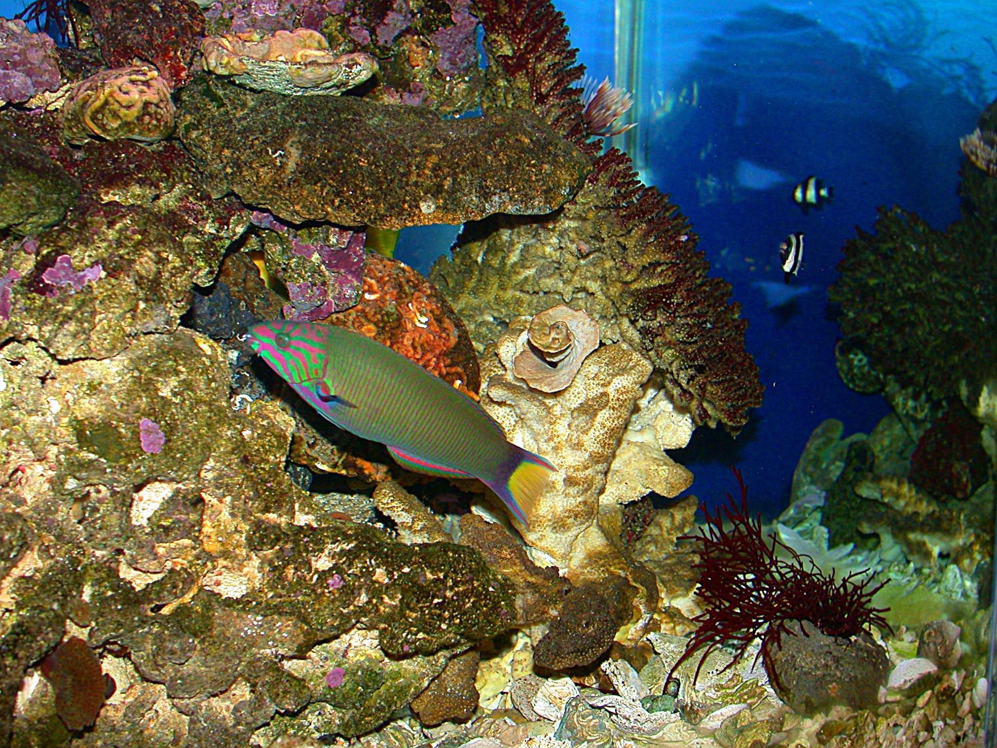 Tropical fish wallpaper fish wallpaper 5413020 fanpop for Tropical aquarium fish