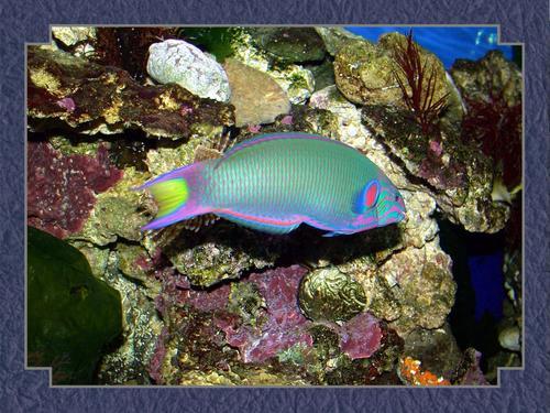Tropical ikan wallpaper