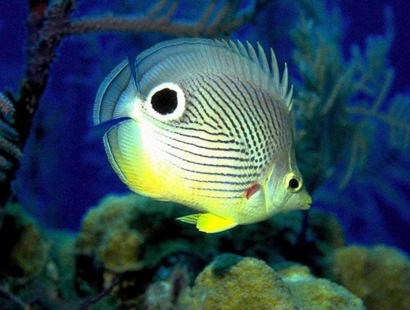 Tropical fish fish photo 5412532 fanpop for Exotic tropical fish