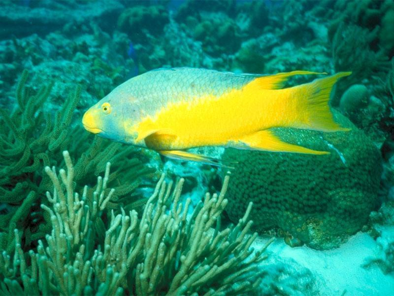 tropic fish - photo #41
