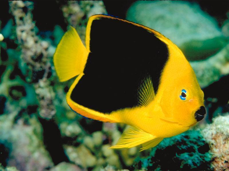 Tropical Fish - Fish Photo (5412559) - Fanpop