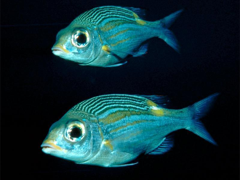 tropic fish - photo #46
