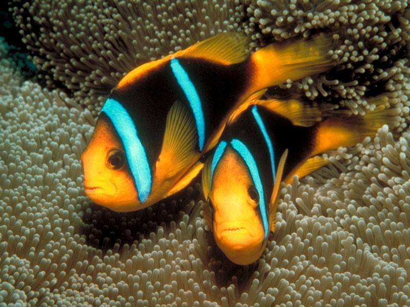tropical fish fish photo 5412593 fanpop