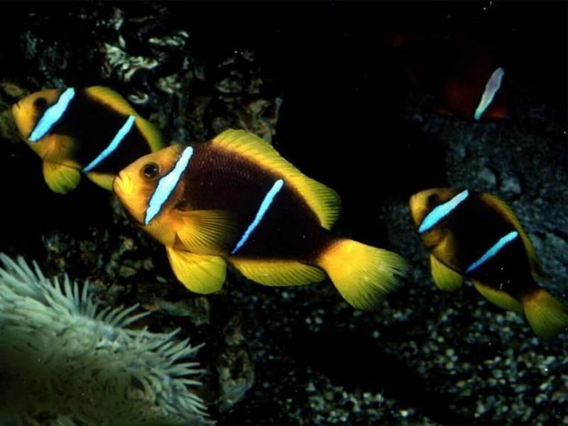 Tropical fish fish photo 5412597 fanpop for Exotic pet fish
