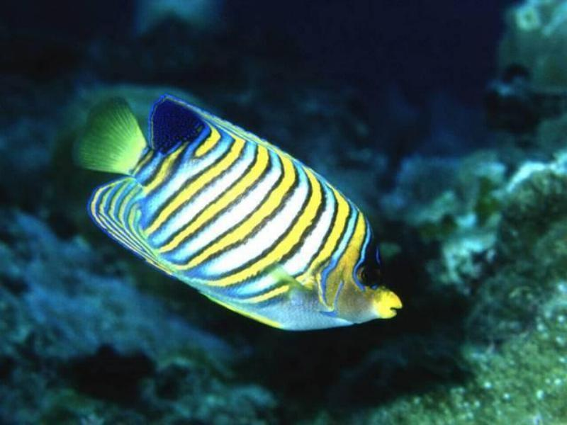 tropic fish - photo #20