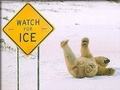 Watch The Ice - wild-animals photo