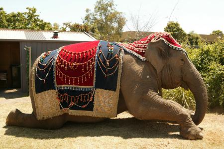 anala - the-elephant-princess photo