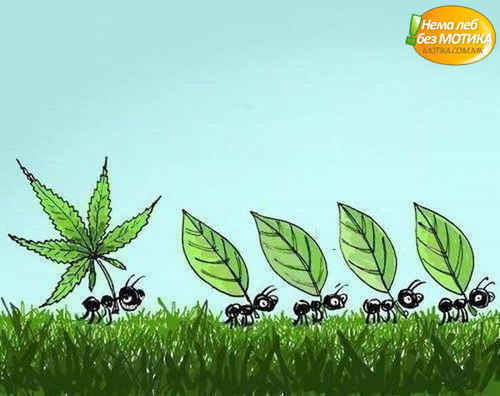 Marijuana wallpaper called marijuana ant