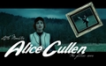 AliceC - alice-cullen wallpaper