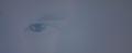 Edward's Eye - twilight-series photo