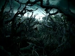 The Dark Side Of Everything Images Spooky Forest Wallpaper And Background Photos