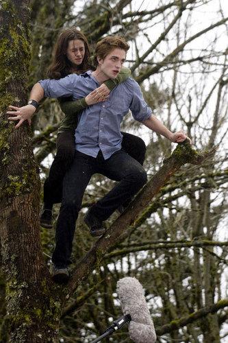 arbre Climbing Scene