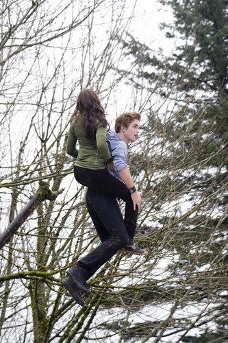 pohon Climbing Scene