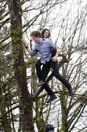 Tree Climbing Scene