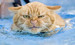 cat_in_the_pool!!! - animal-humor icon
