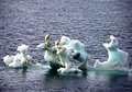 global warming - keep-earth-green photo
